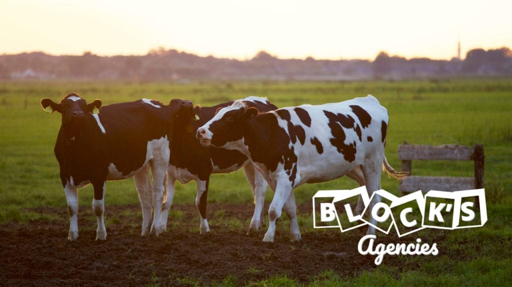 dairy-cows-farm-photo